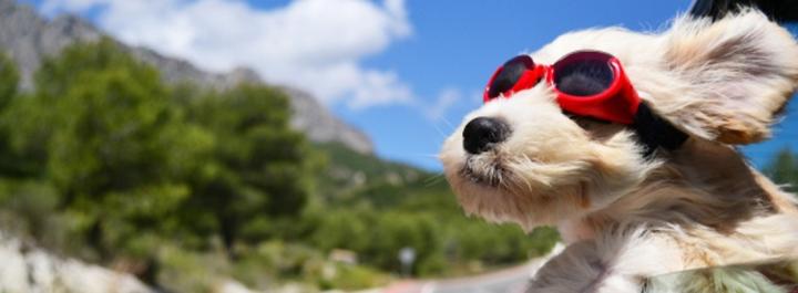 Viajar en coche con tu mascota: cumpliendo lasnormas